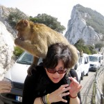 Barbary Macaque On My Back!